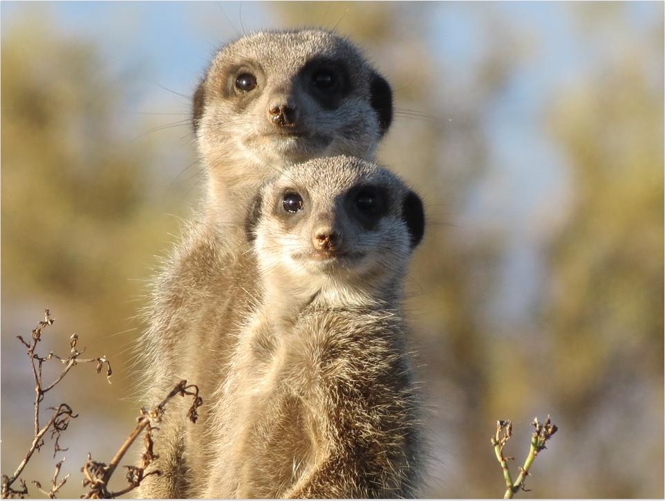 lemuriens-veille-SEO